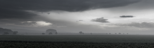Misty and cloudy field