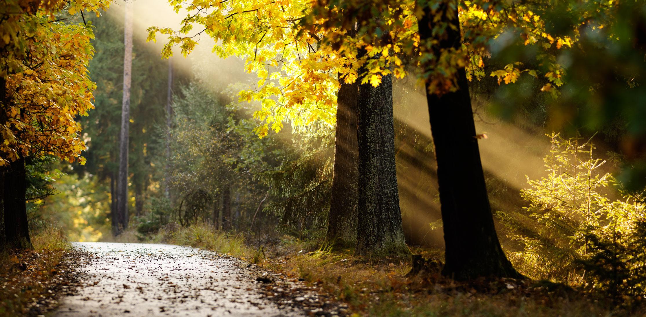 Sedlčany podzim - mayhemer's blog