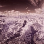 sweden wood field infrared