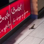 bergen bird in shop